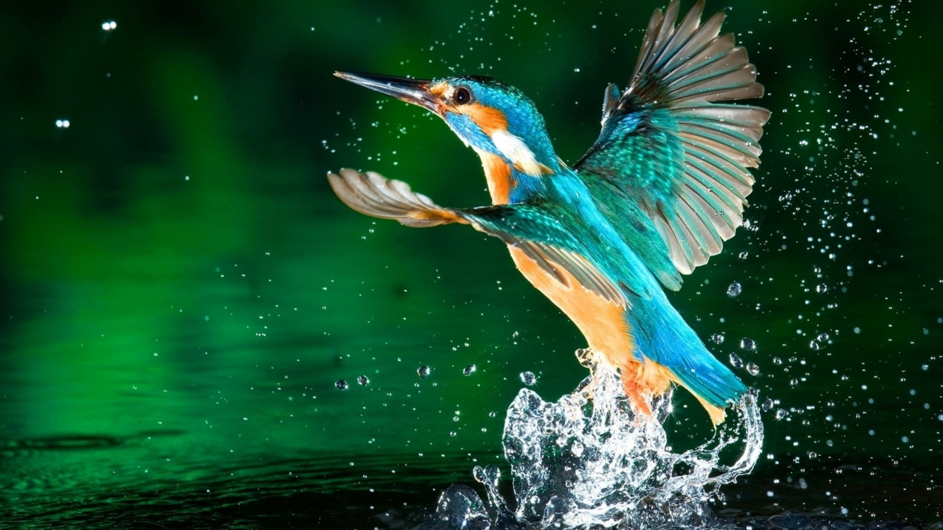 10 Latest Cool Wallpapers Of Animals Full Hd 1080p For Pc